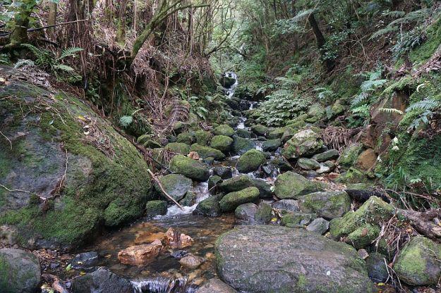 DSC00343_Waiorongomai