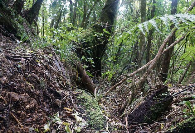 DSC00354_Waiorongomai