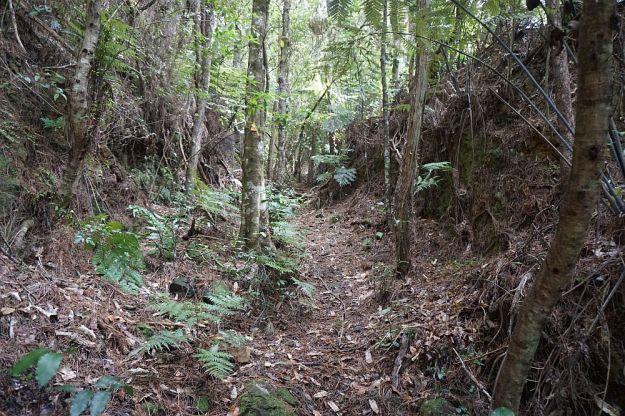 DSC00377_Waiorongomai