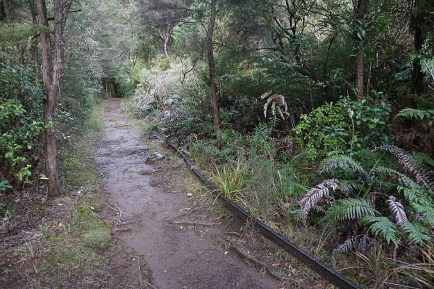 DSC01716_BluffStreamKauri