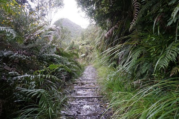 DSC01728_BluffStreamKauri