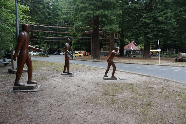 DSC02853_RedwoodsPohaturoa