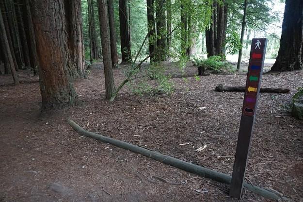DSC02860_RedwoodsPohaturoa