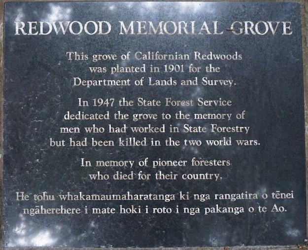DSC02866_RedwoodsPohaturoa
