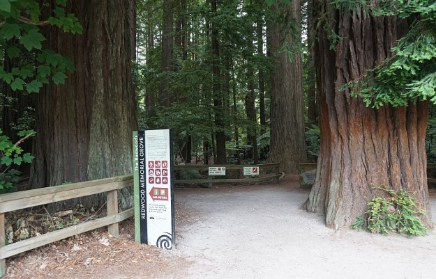 DSC02867_RedwoodsPohaturoa
