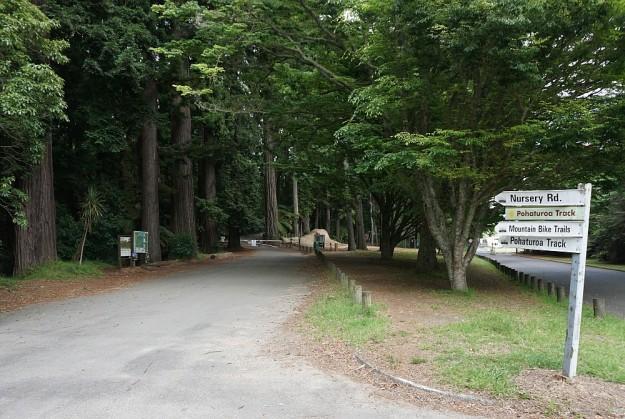 DSC02868_RedwoodsPohaturoa