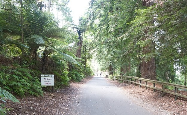DSC02870_RedwoodsPohaturoa