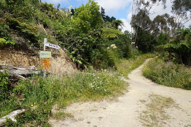 DSC02871_RedwoodsPohaturoa