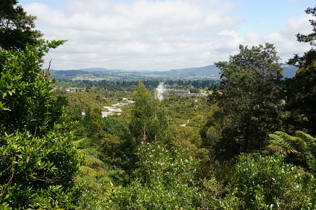 DSC02873_RedwoodsPohaturoa