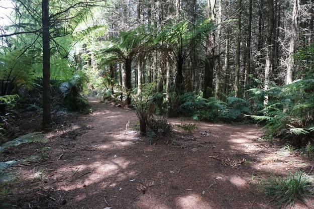 DSC02890_RedwoodsPohaturoa