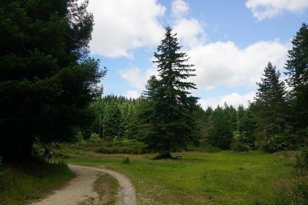 DSC02904_RedwoodsPohaturoa
