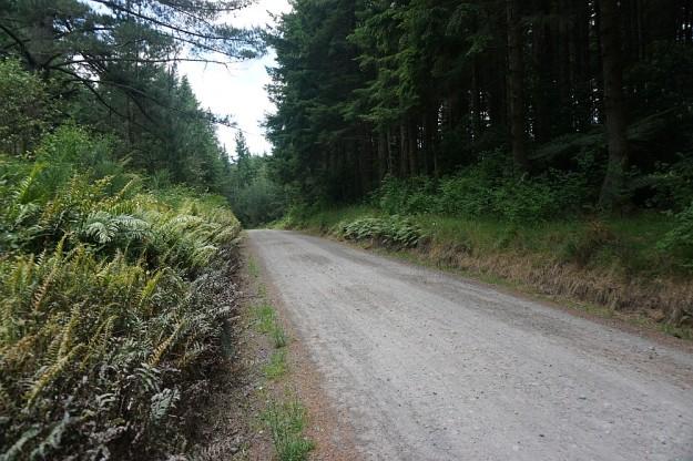 DSC02906_RedwoodsPohaturoa