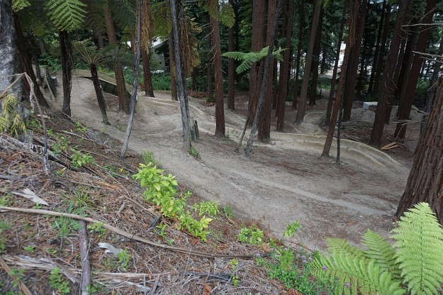 DSC02908_RedwoodsPohaturoa
