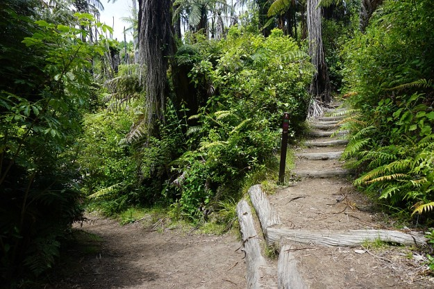 DSC02914_RedwoodsQuarry