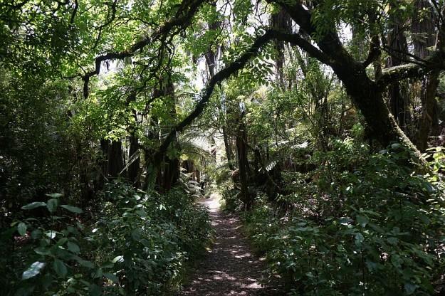 DSC02915_RedwoodsQuarry