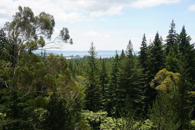 DSC02918_RedwoodsQuarry