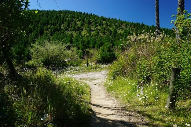 DSC02931_RedwoodsTokorangiPa