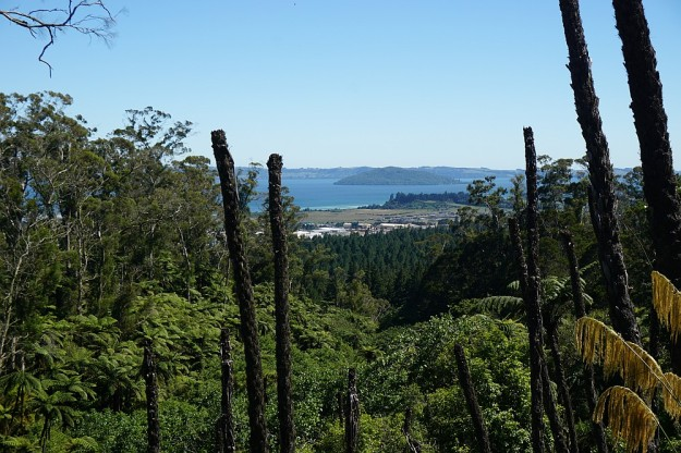 DSC02934_RedwoodsTokorangiPa