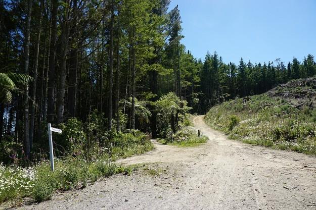DSC02939_RedwoodsTokorangiPa