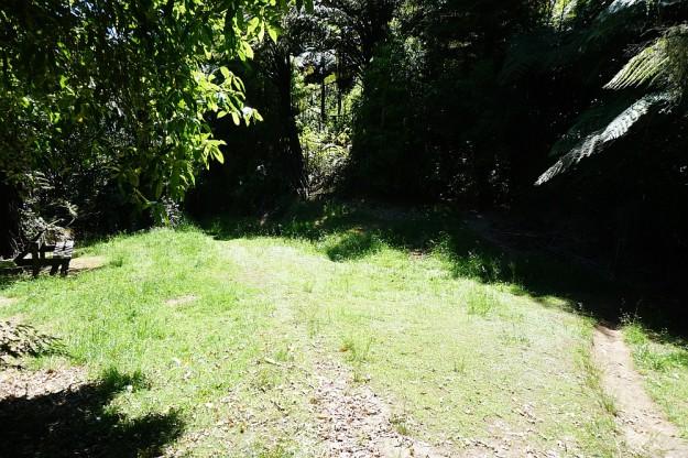 DSC02947_RedwoodsTokorangiPa