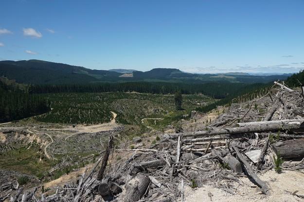 DSC02957_RedwoodsTokorangiPa