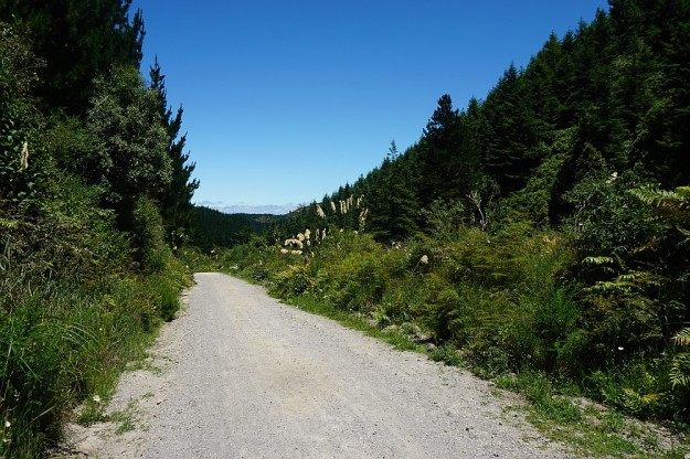 DSC02974_RedwoodsTokorangiPa