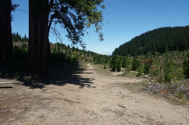 DSC02982_RedwoodsTokorangiPa