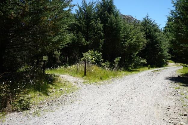 DSC02984_RedwoodsTokorangiPa