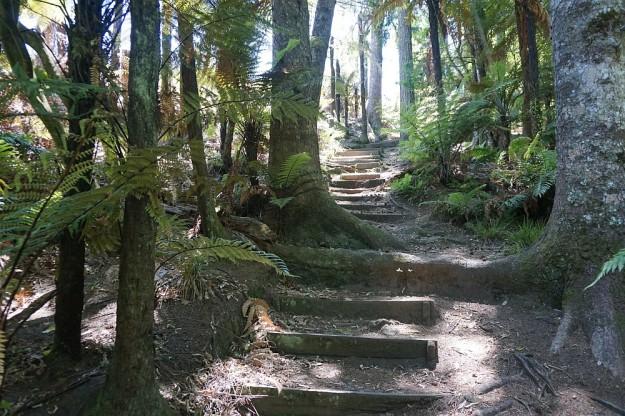 DSC02985_RedwoodsTokorangiPa
