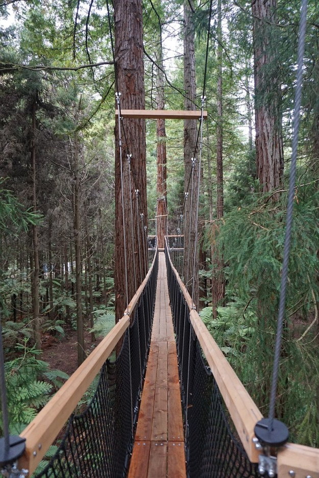 DSC03300_treewalk