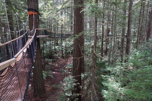 DSC03306_treewalk