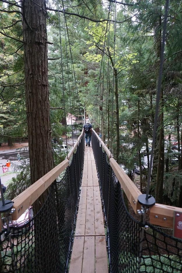 DSC03317_treewalk