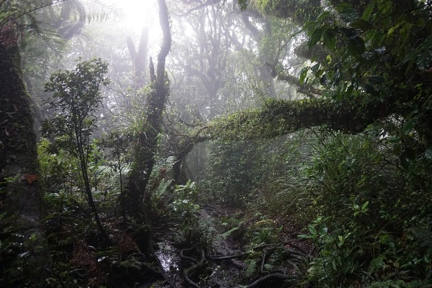 DSC03681_MaungatautariNorth